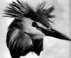картинки водоплавающие птицы.